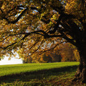 tree-nature-forest-branch-blossom-plant-