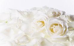 witte rozen.jpg