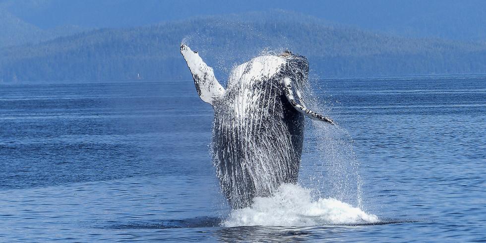 Krachtcirkel Dolfijn