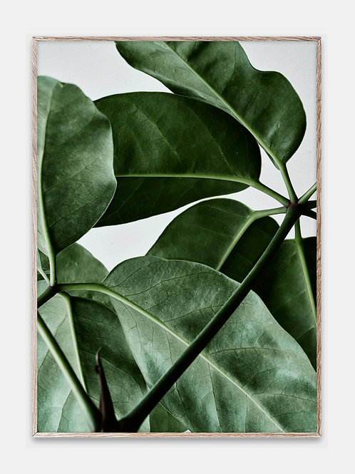 Paper Collective Poster Green Grünpflanze Monstera