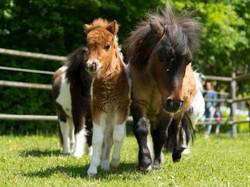 Baby&Kinder_Pony