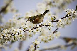 spring-events.jpg