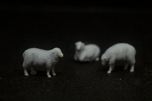 Sheep (3 pack)