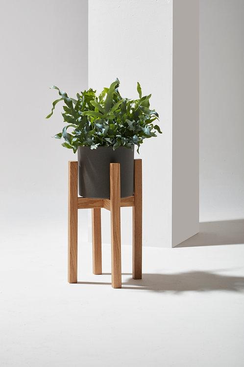PIANO Plant | Dąb