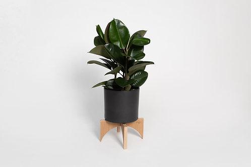 TONDO Plant