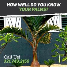 know_palms_1.jpg