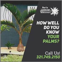 know_palms_2.jpg