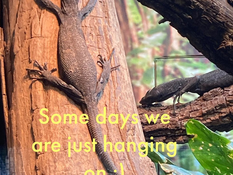 Some days are just about hanging on!