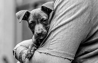 bernhard puppy closeup 2 (1 of 1).jpg