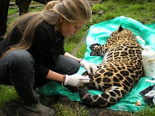 Animal-treatment-National-Geographic.jpe