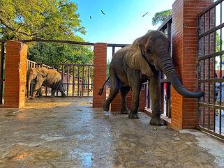 karachi zoo elephants 2020.jpg