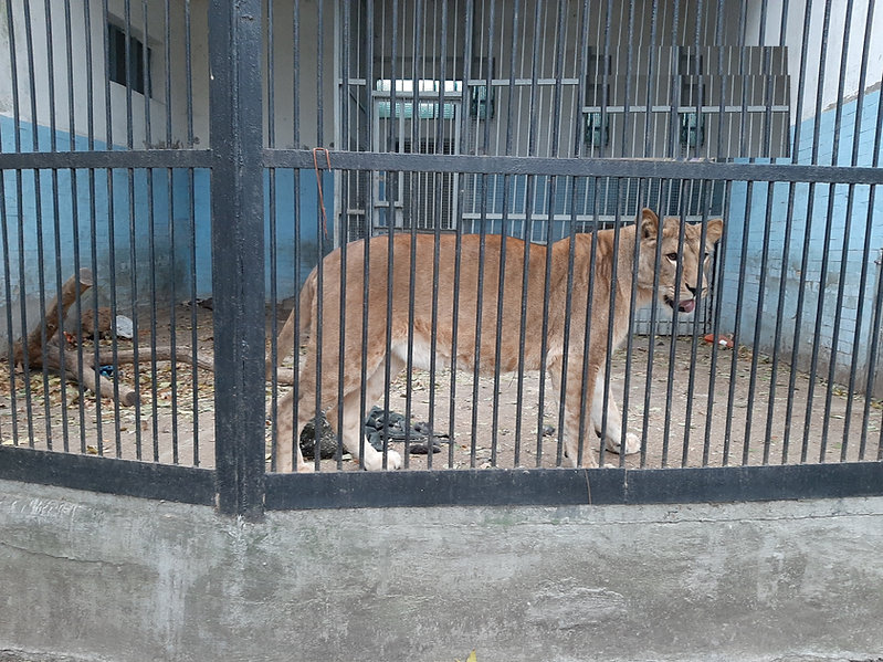 lion-ukraine-1.jpg