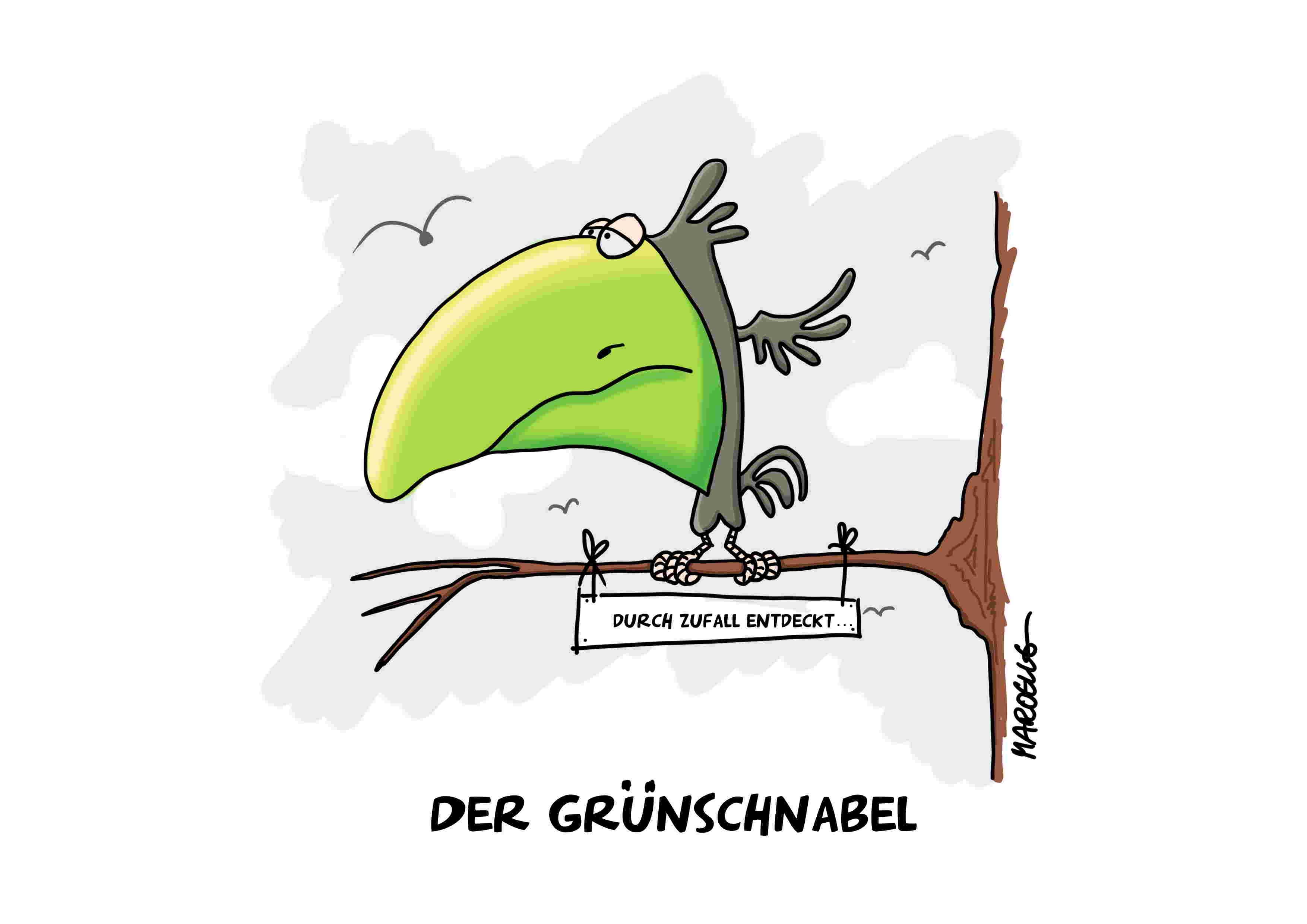 grünschnabel