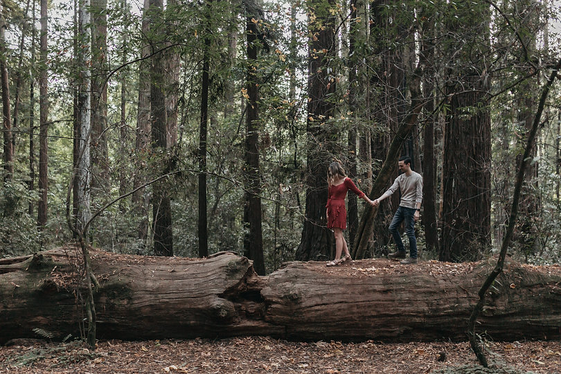henry cowell redwood state park engagement session