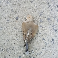 a third epitaph for dead birds