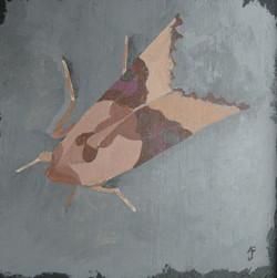 Moth #4: phlogophora meticulosa