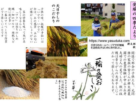 安塚の四季おたより(秋の収穫)昔を思い出しながらの収穫は楽しい!!