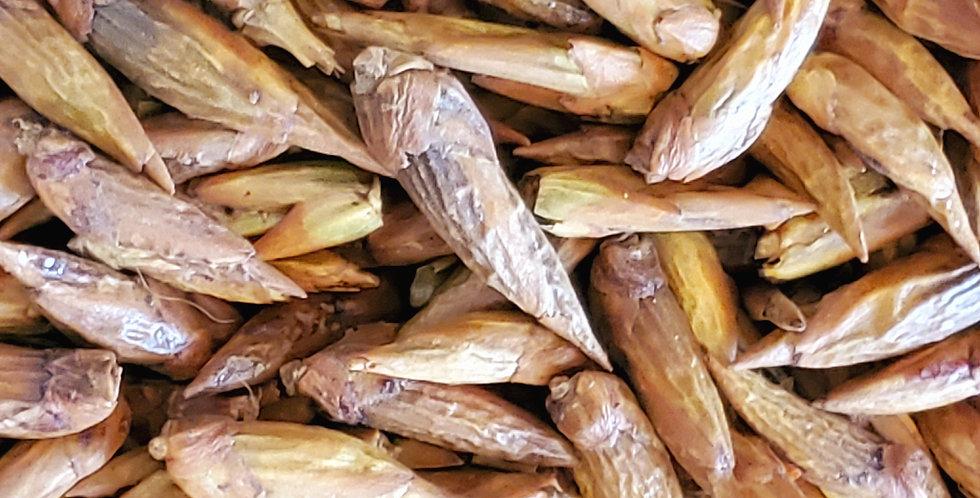 Organic Balm of Gilead Buds