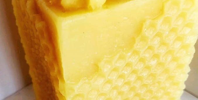 Large Honeycomb with Bees