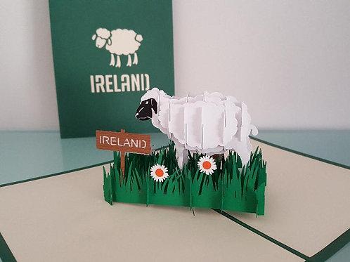Pop up Card -Irish sheep