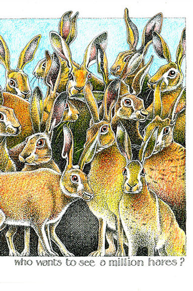 Greeting Card -Who wants to be a million hares