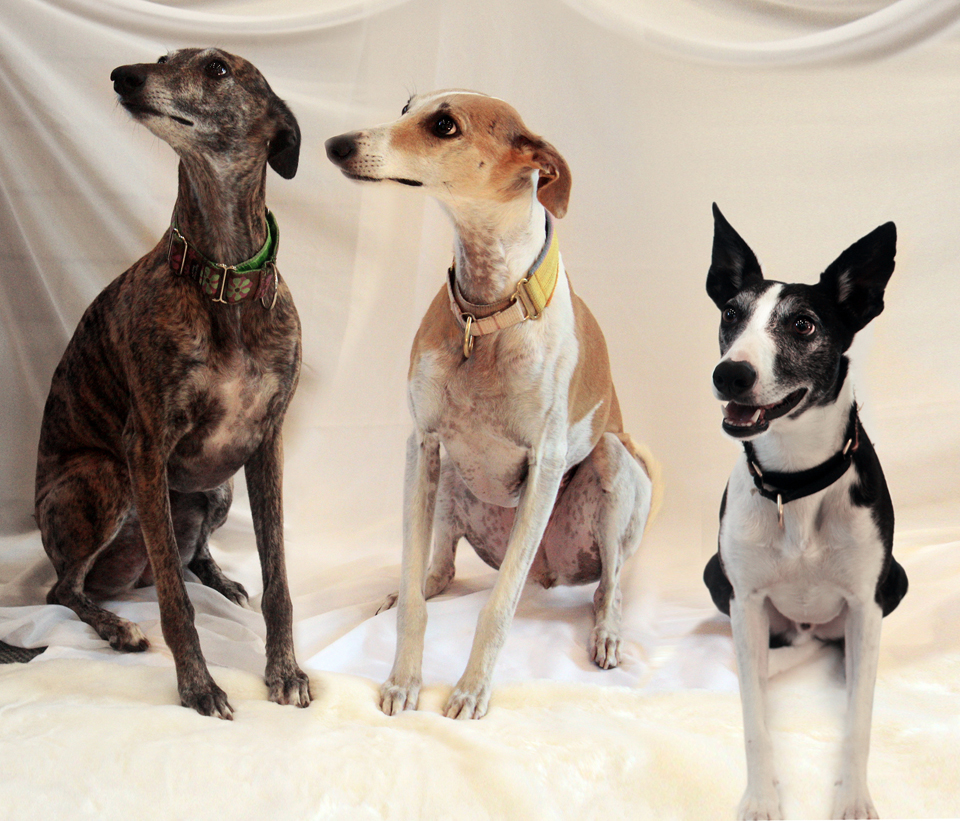 3 dogs website.jpg