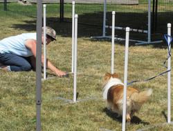 weave poles website.jpg