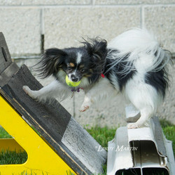 flyball feather web.jpg