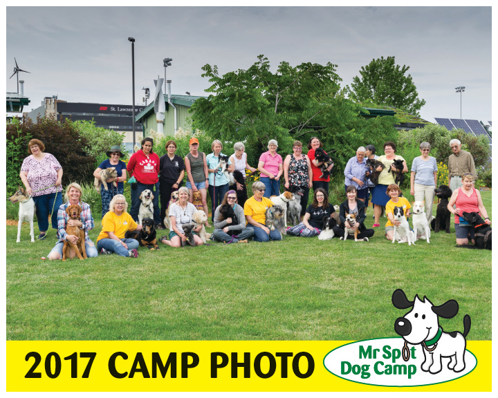 2017 MR SPOT DOG CAMP.jpg