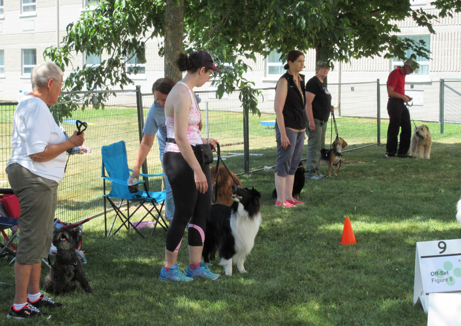 rally obedience group website.jpg