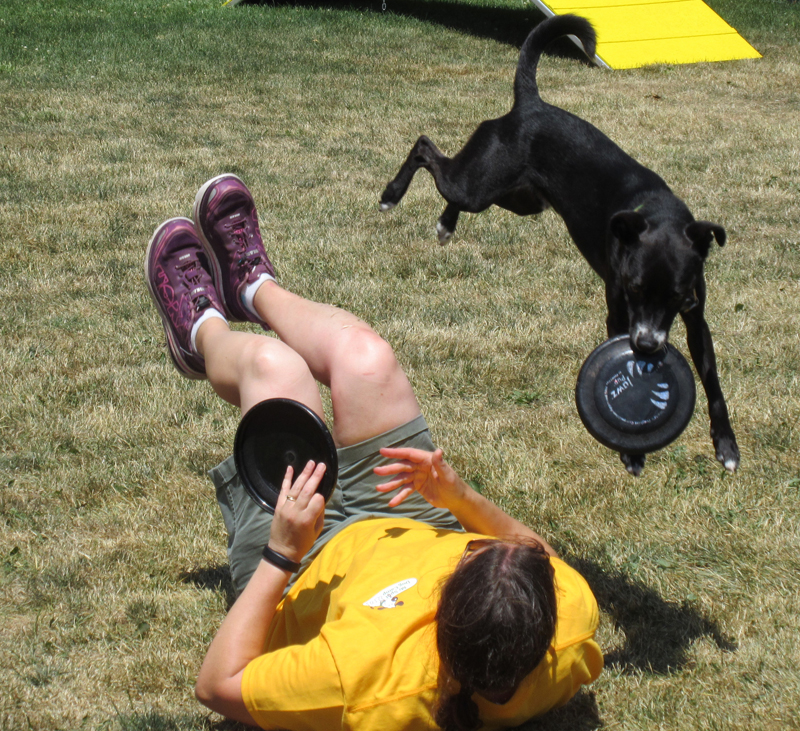 k9 disc_Stephanie website.jpg