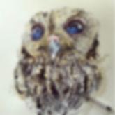 Zeus the Owl
