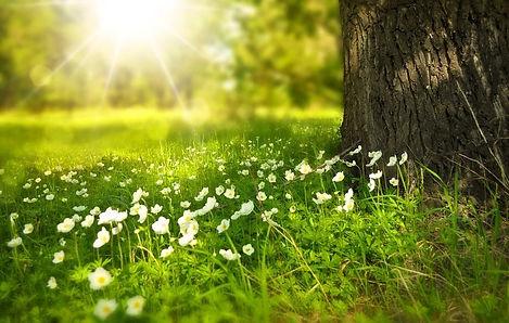 tree and flowers.jpg