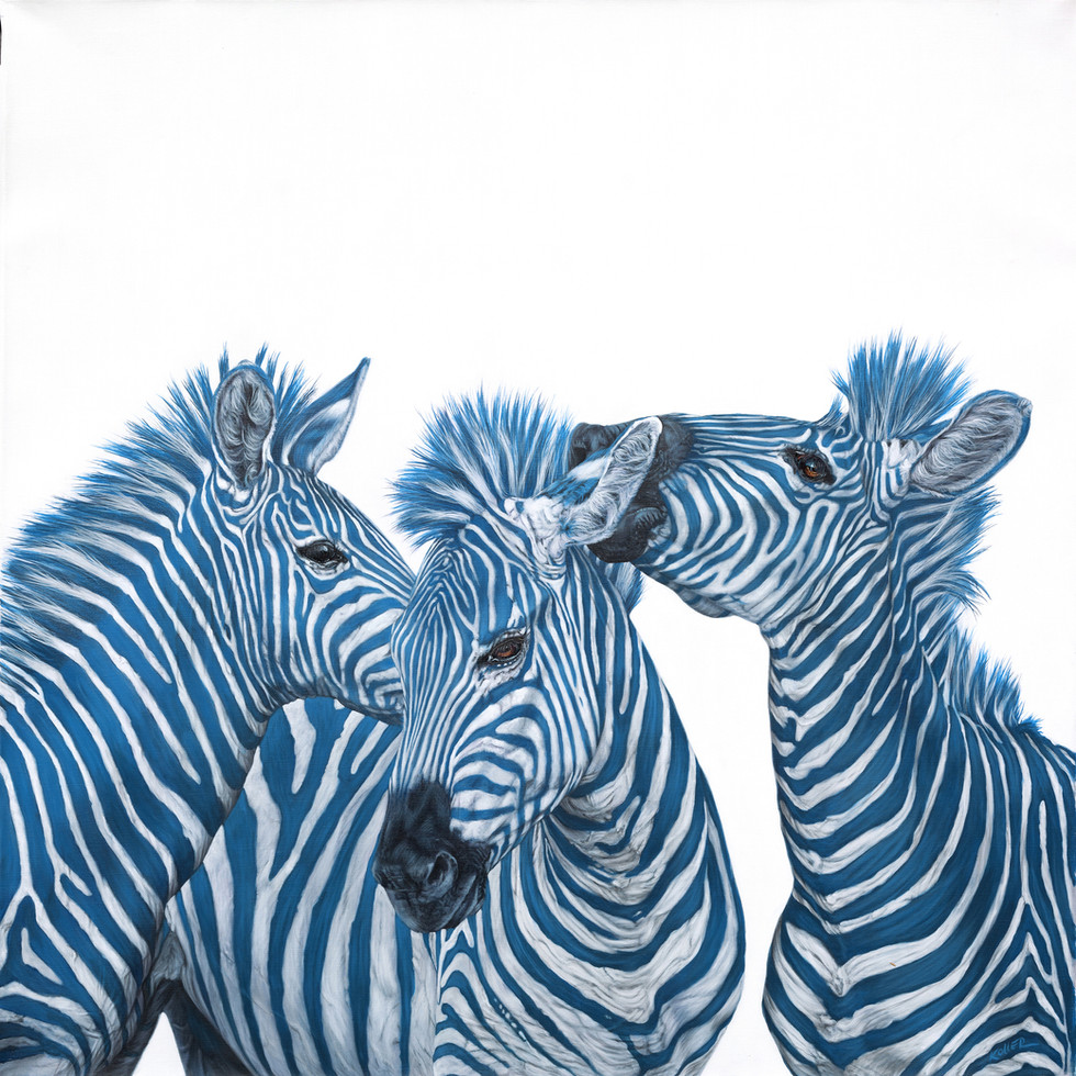 THREE BLUE ZEBRAS, 2015