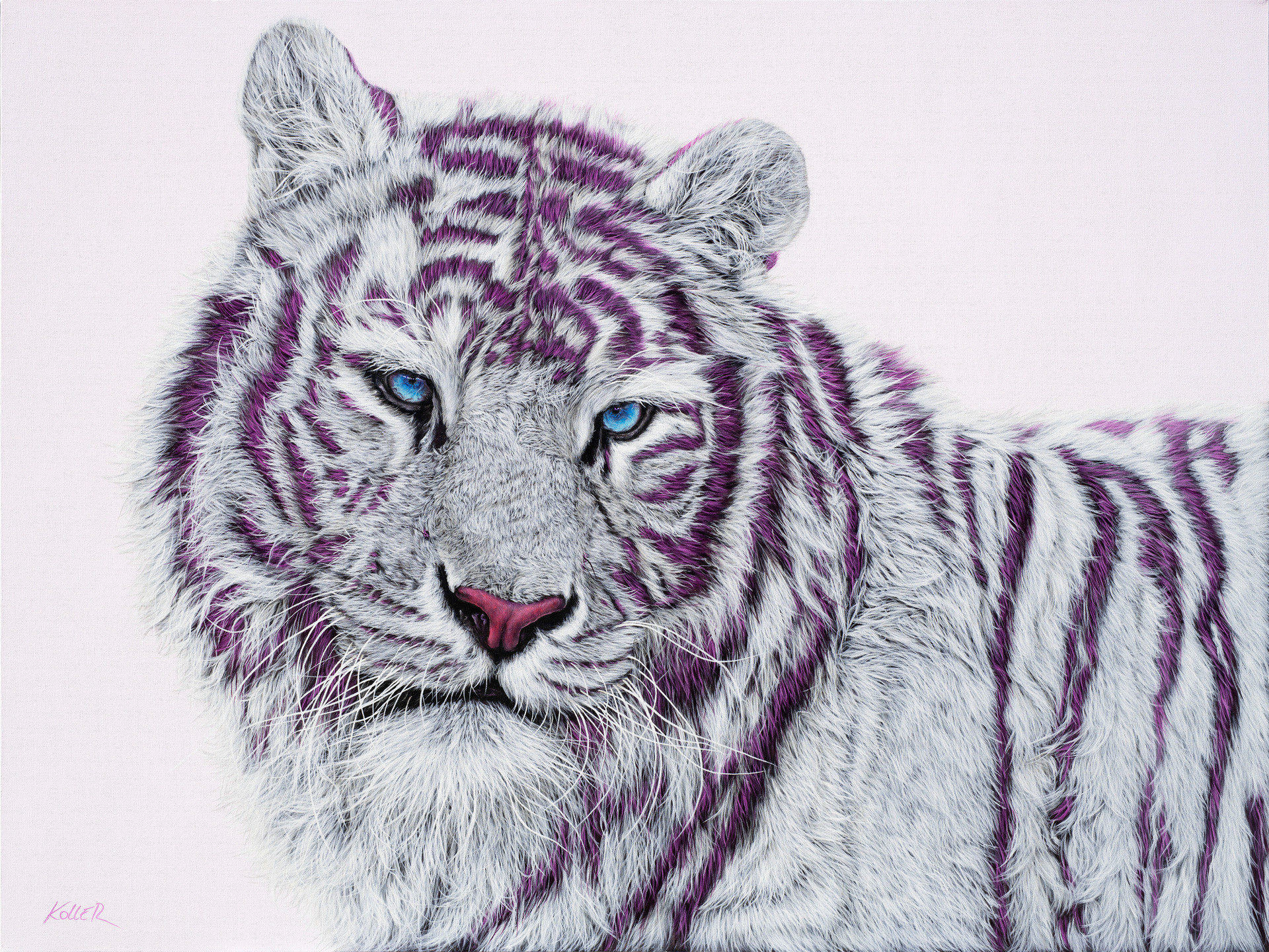 TIGER WITH MAGENTA STRIPES, 2019