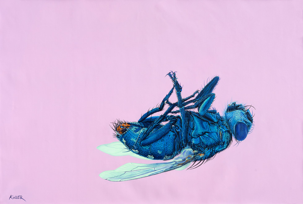 FLY ON PINK, 2014