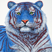 SIBERIAN TIGER IN BLUE