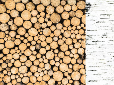 Mint Wishes- Logs 12 X 12 Paper