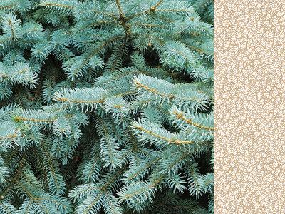 Mint Wishes- Fresh Pine 12 X 12 Paper