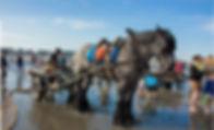 la-peche-aux-crevettes-a-cheval-a-oostdu