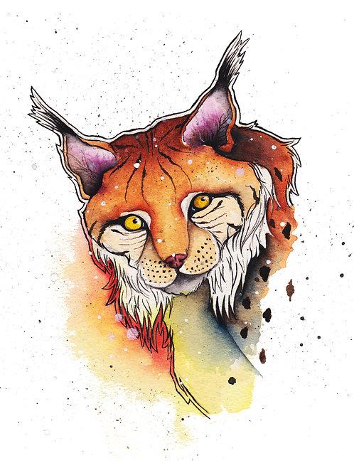 Art Print 8x10: Bobcat