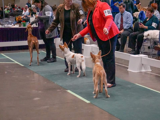 My Journey in Dog Shows