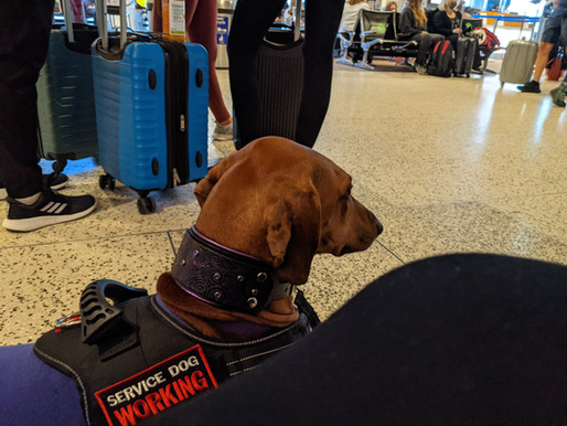 Gatekeeping Service Dogs Can Ruin Lives