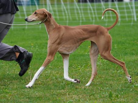 Meet my Dogs: Amidi