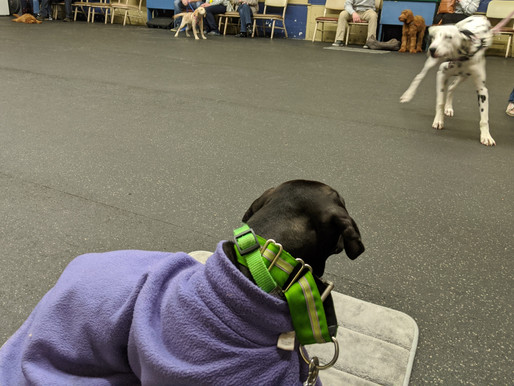 The Benefit of Group Classes for All Dogs