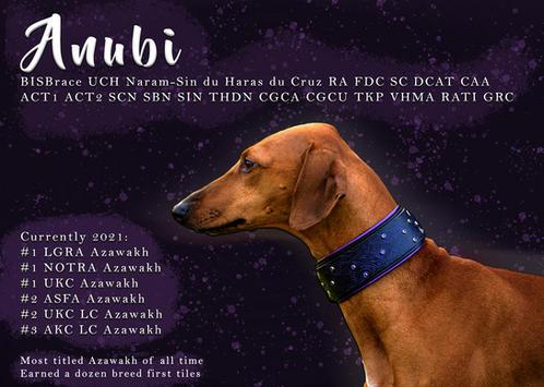 Anubi Fourth Birthday Ad