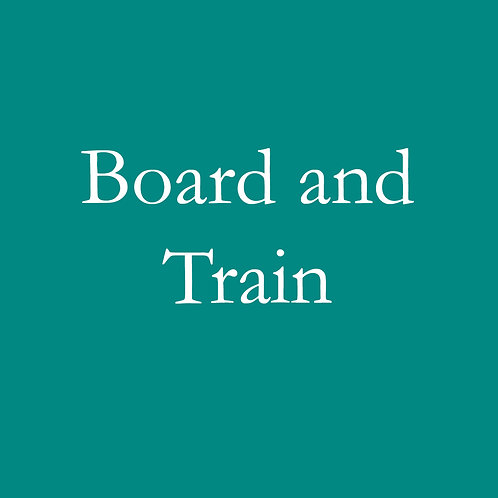 Board and Train (1 Week)