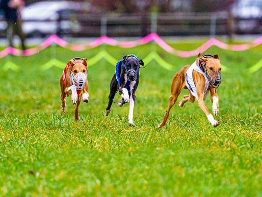 Amateur Dog Racing - LGRA, NOTRA, AOK9
