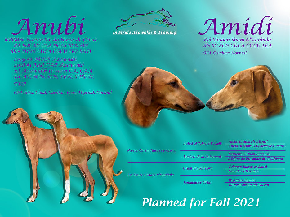 Anu and Ami Litter Announcement.jpg