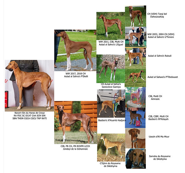 Anubi Photo Pedigree.jpg